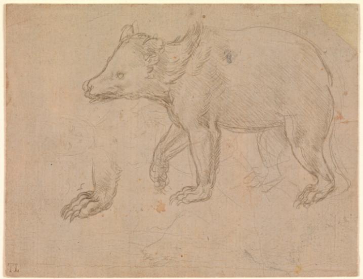 leonardo bear